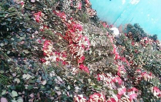 """Sau 8.3, hàng tấn hoa hồng thành """"núi"""" rác - 1"""