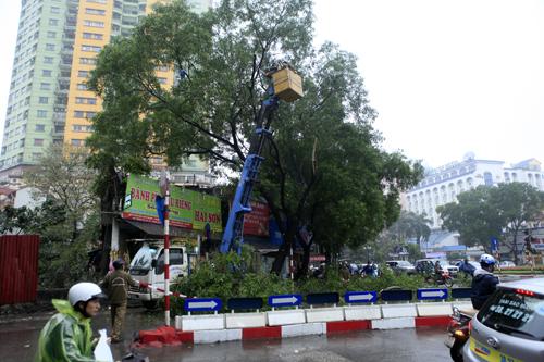 HN: Chặt hàng loạt cây xanh trên đường Nguyễn Chí Thanh - 7