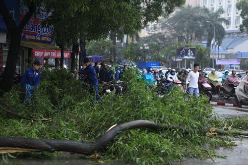 HN: Chặt hàng loạt cây xanh trên đường Nguyễn Chí Thanh - 9