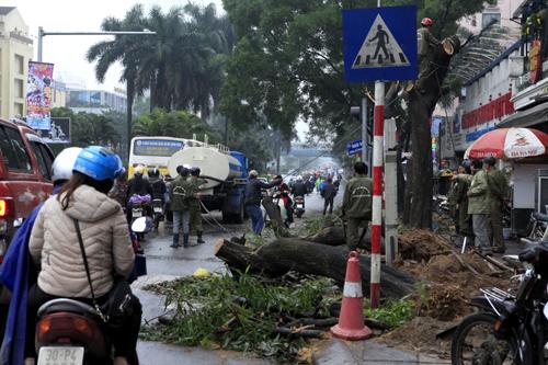 HN: Chặt hàng loạt cây xanh trên đường Nguyễn Chí Thanh - 4