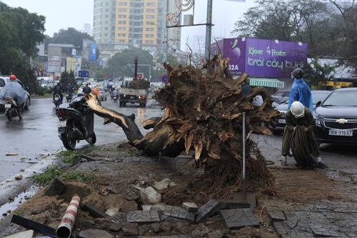 HN: Chặt hàng loạt cây xanh trên đường Nguyễn Chí Thanh - 6