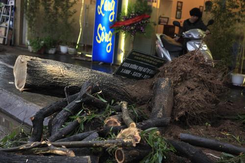 HN: Chặt hàng loạt cây xanh trên đường Nguyễn Chí Thanh - 11