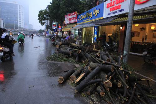 HN: Chặt hàng loạt cây xanh trên đường Nguyễn Chí Thanh - 10