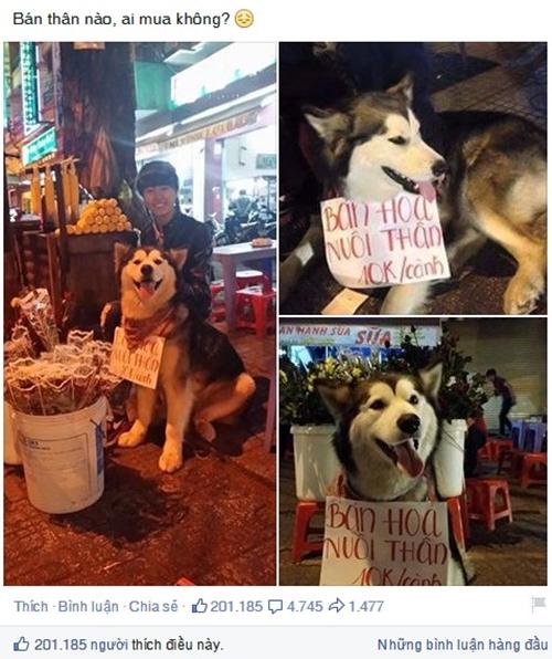 Chú chó đeo biển ''bán hoa nuôi thân'' gây sốt - 1