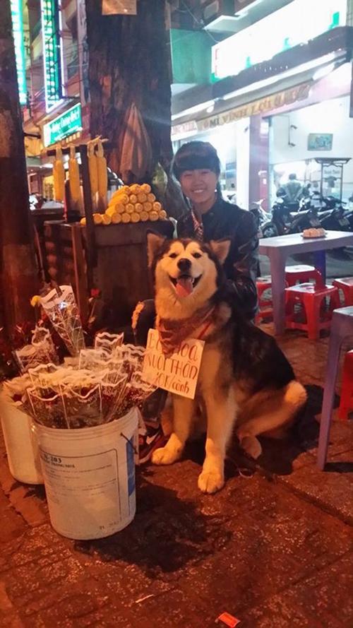 Chú chó đeo biển ''bán hoa nuôi thân'' gây sốt - 4