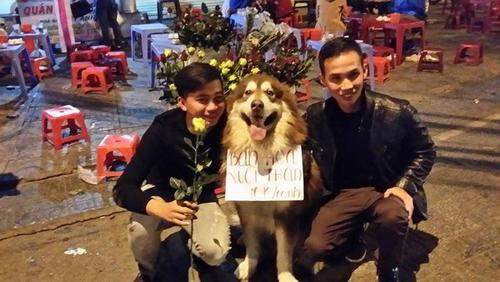 Chú chó đeo biển ''bán hoa nuôi thân'' gây sốt - 7