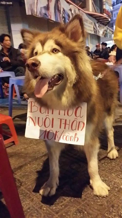 Chú chó đeo biển ''bán hoa nuôi thân'' gây sốt - 3