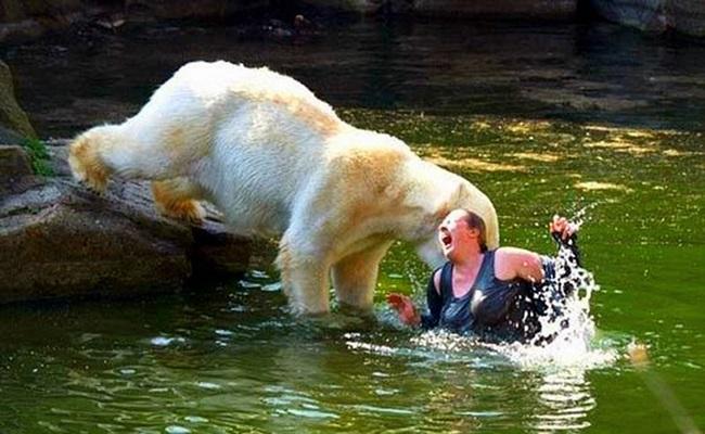 Chú gấu trắng tưởng người phụ nữ này là mẹ mình chăng?