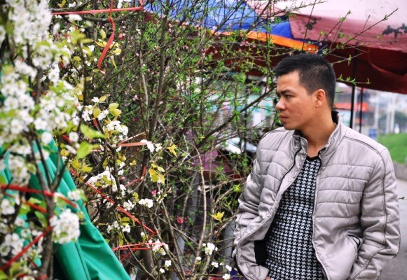 Hết Tết, hoa lê rừng giá bạc triệu vẫn hút khách Thủ đô - 12