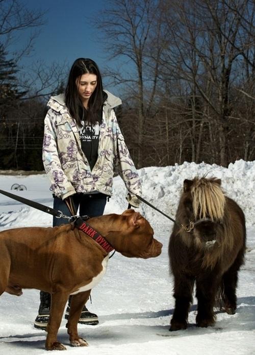 Video: Chú chó pitbull lớn nhất thế giới nặng 80kg - 6