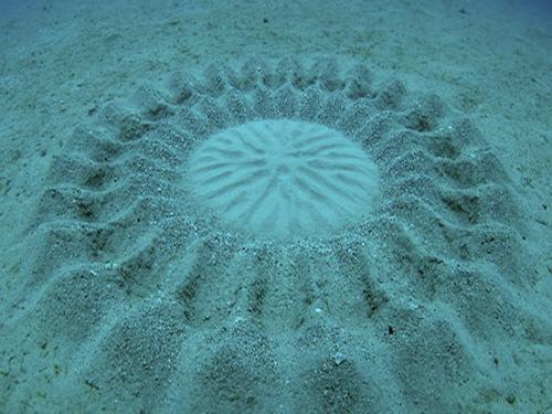 """Giải mã """"vòng tròn kỳ lạ"""" phát hiện dưới đáy biển Nhật Bản - 1"""