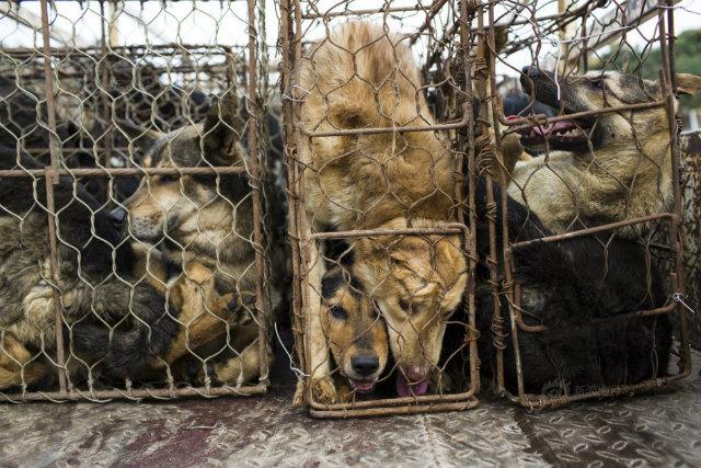 Bên trong lò giết mổ chó kinh hoàng ở Trung Quốc - 4