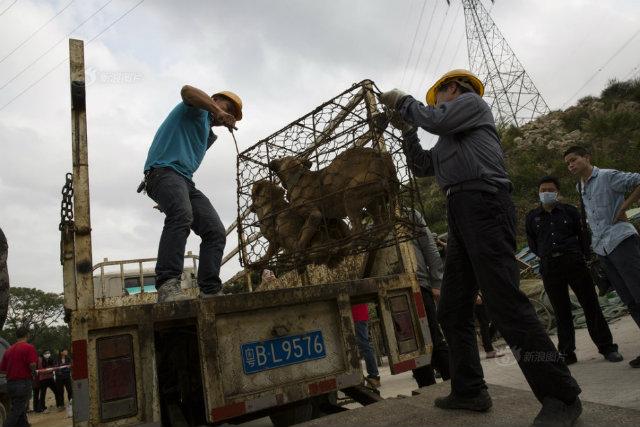 Bên trong lò giết mổ chó kinh hoàng ở Trung Quốc - 5