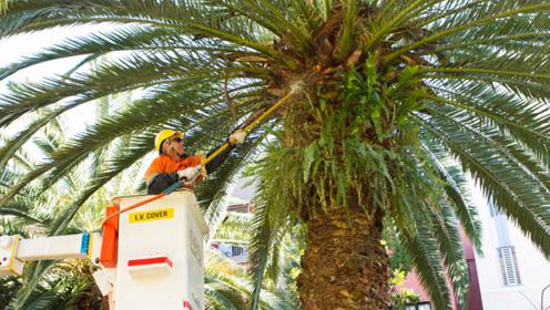 Nhìn ra thế giới: Chặt cây trái phép bị phạt 1,1 triệu USD - 2
