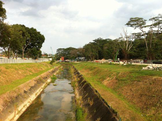 Singapore: Chặt 20 cây để đào kênh, chính quyền bị chất vấn - 1