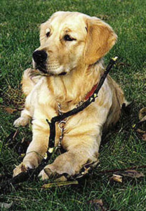 Câu chuyện cảm động về 25 chú chó dũng cảm cứu người - 9