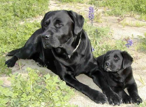 Câu chuyện cảm động về 25 chú chó dũng cảm cứu người - 3