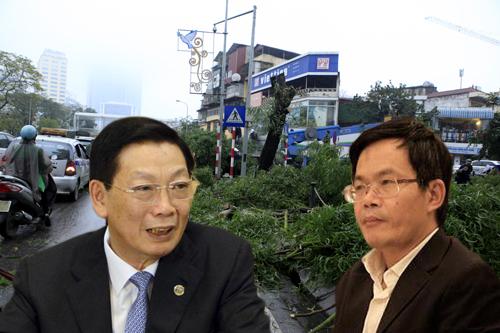 """Chặt 6.700 cây xanh: Chủ tịch HN trả lời """"thư ngỏ"""" - 1"""