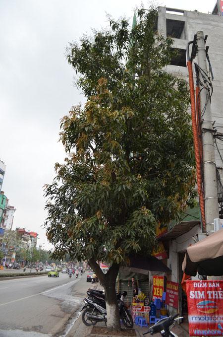 """HN: Gặp người phụ nữ từng """"cố thủ"""" trên cây phản đối chặt hạ - 2"""