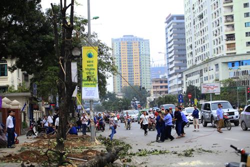 """Cận cảnh """"công trường"""" đốn cây ở Thủ đô - 3"""