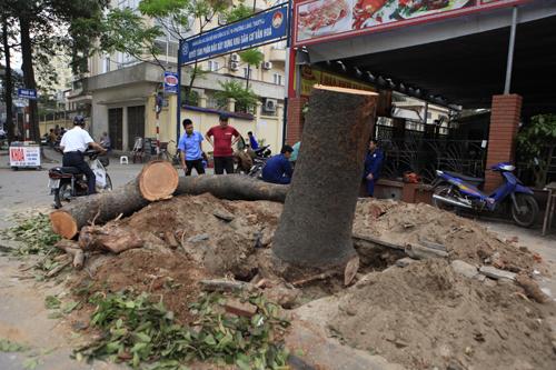 """Cận cảnh """"công trường"""" đốn cây ở Thủ đô - 6"""