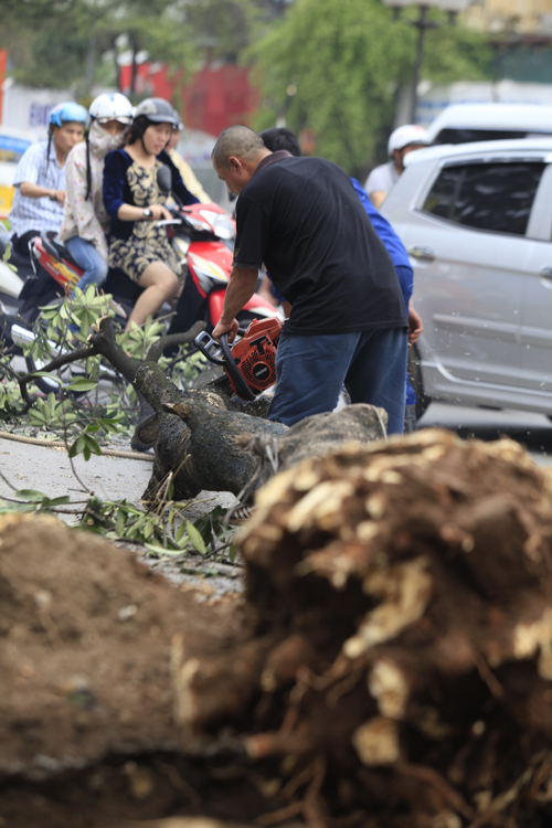 """Cận cảnh """"công trường"""" đốn cây ở Thủ đô - 4"""