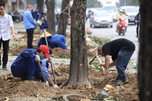 """Cận cảnh """"công trường"""" đốn cây ở Thủ đô - 7"""