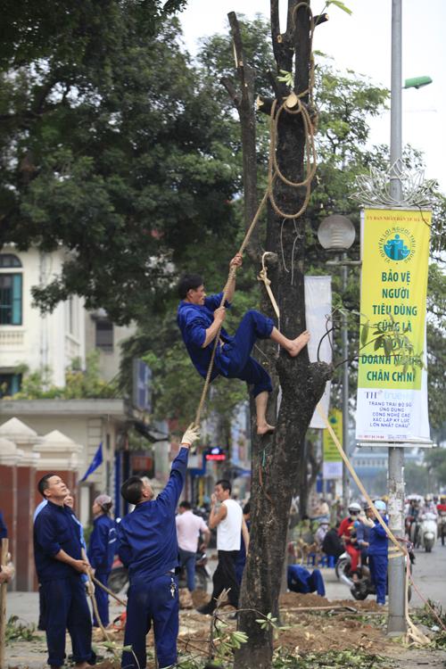 """Cận cảnh """"công trường"""" đốn cây ở Thủ đô - 12"""