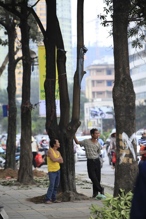 """Cận cảnh """"công trường"""" đốn cây ở Thủ đô - 11"""