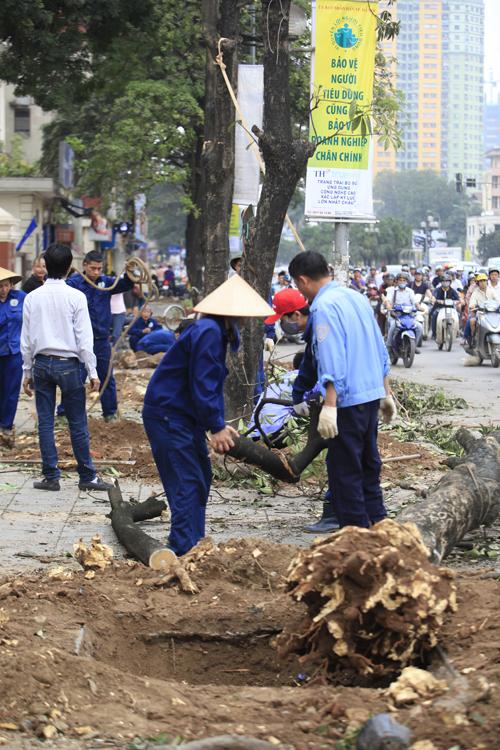 """Cận cảnh """"công trường"""" đốn cây ở Thủ đô - 13"""
