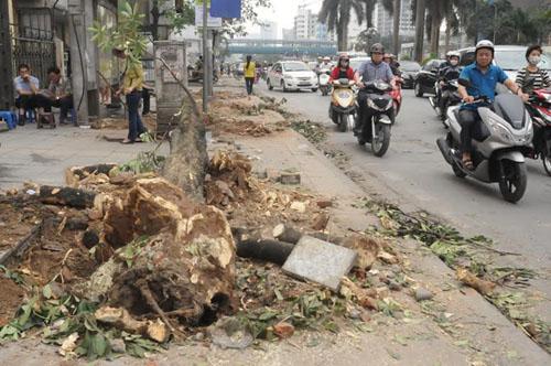"""Cận cảnh """"công trường"""" đốn cây ở Thủ đô - 14"""
