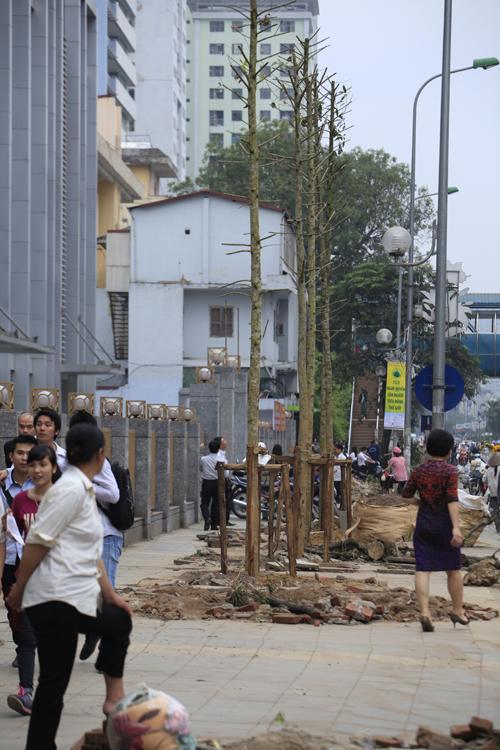 """GS Nguyễn Lân Dũng: """"6.700 cây bị chặt hạ là số quá lớn"""" - 2"""