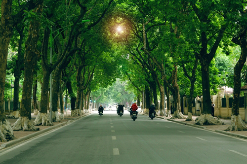 """Nồng Nàn Phố làm thơ tặng 6.700 cây xanh bị """"khai tử"""" - 1"""