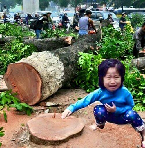Những hình ảnh chế về chặt cây đáng suy ngẫm - 1