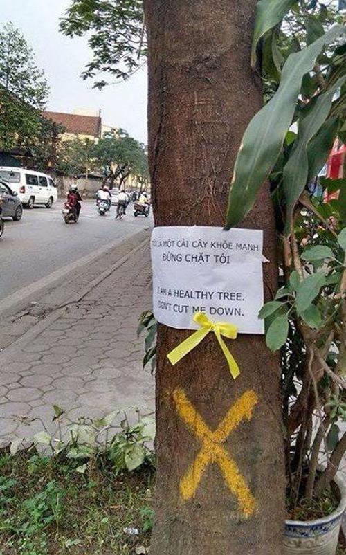 Những hình ảnh chế về chặt cây đáng suy ngẫm - 7