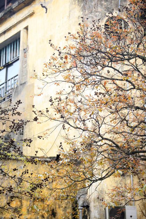 Sắc màu Hà Nội chỉ là hoài niệm nếu 6.700 cây bị đốn hạ - 3