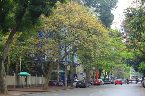 Sắc màu Hà Nội chỉ là hoài niệm nếu 6.700 cây bị đốn hạ - 6