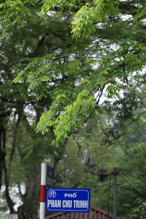 Sắc màu Hà Nội chỉ là hoài niệm nếu 6.700 cây bị đốn hạ - 5