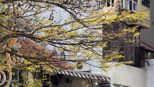 Sắc màu Hà Nội chỉ là hoài niệm nếu 6.700 cây bị đốn hạ - 12