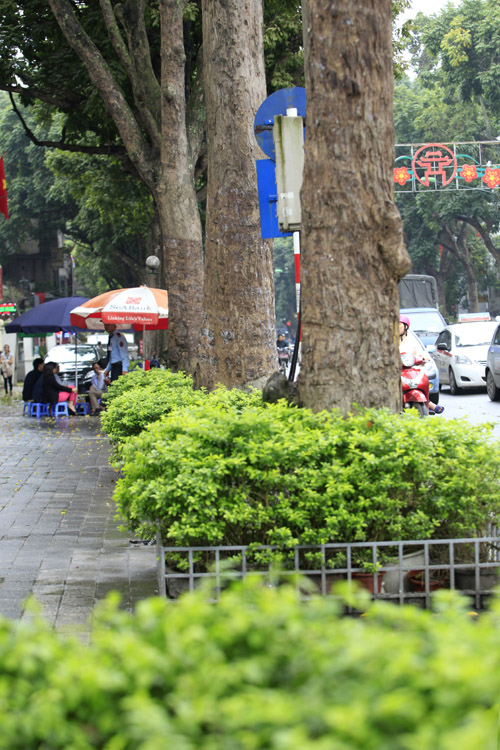 Sắc màu Hà Nội chỉ là hoài niệm nếu 6.700 cây bị đốn hạ - 9