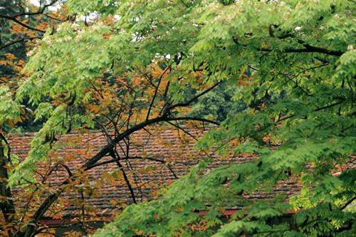 Sắc màu Hà Nội chỉ là hoài niệm nếu 6.700 cây bị đốn hạ - 7