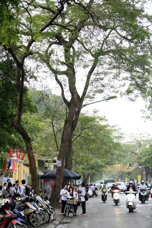 Sắc màu Hà Nội chỉ là hoài niệm nếu 6.700 cây bị đốn hạ - 14