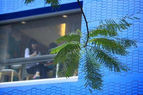 Sắc màu Hà Nội chỉ là hoài niệm nếu 6.700 cây bị đốn hạ - 15