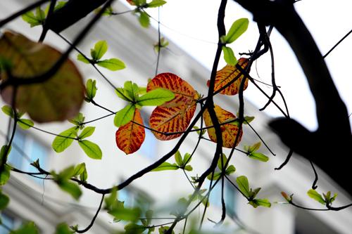 Sắc màu Hà Nội chỉ là hoài niệm nếu 6.700 cây bị đốn hạ - 17