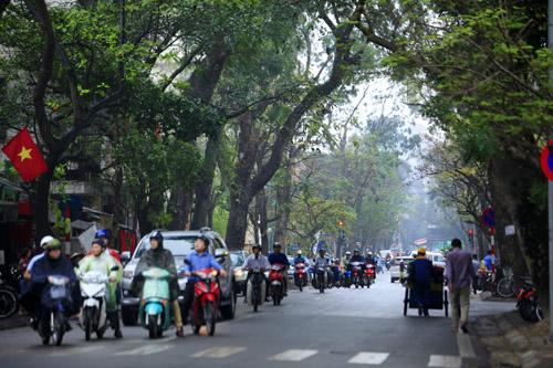 Sắc màu Hà Nội chỉ là hoài niệm nếu 6.700 cây bị đốn hạ - 16