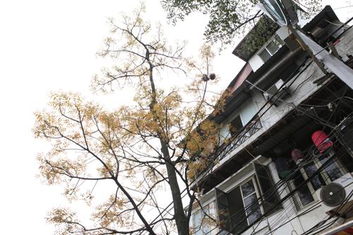 Sắc màu Hà Nội chỉ là hoài niệm nếu 6.700 cây bị đốn hạ - 20
