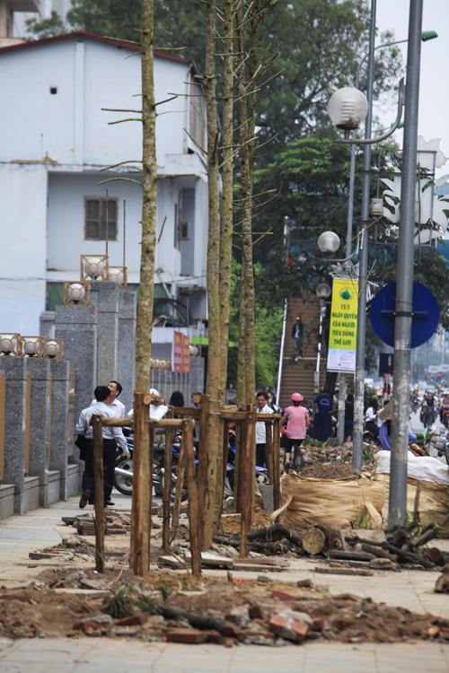 Vụ chặt 6.700 cây xanh: 'Thay bằng cây vàng tâm là không phù hợp' - 2