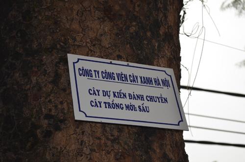 """Góp ý vụ chặt 6.700 cây xanh: Đường dây nóng """"nói"""" gì? - 4"""
