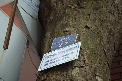 """Góp ý vụ chặt 6.700 cây xanh: Đường dây nóng """"nói"""" gì? - 9"""