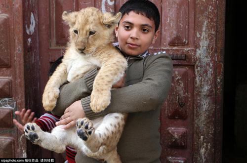 Nuôi 2 chú sư tử làm thú cưng cho con chơi đùa - 7